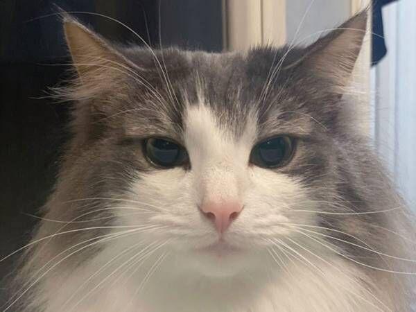 猫の表情ビフォーアフター 飼い主の『ひと声』で、ここまで変わるとは!