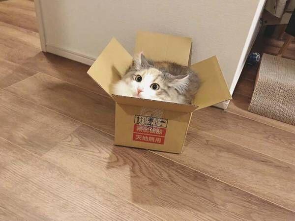 『箱にすっぽり収まった猫』に反響 「ジャストフィット」「これは最高の1枚」
