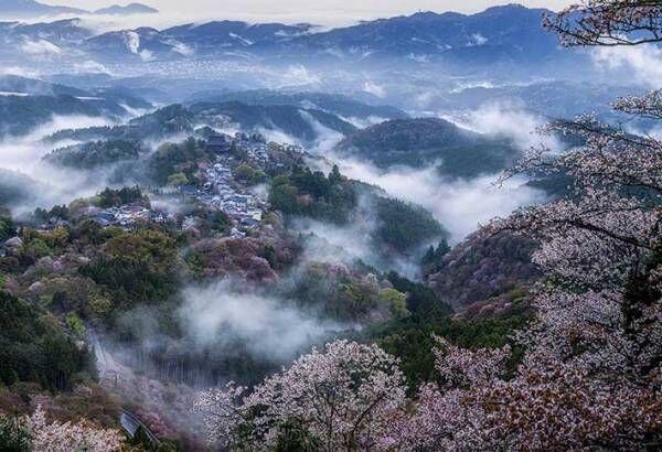 奈良県にある『桜雲海』 神様がいそうな4枚がこちら