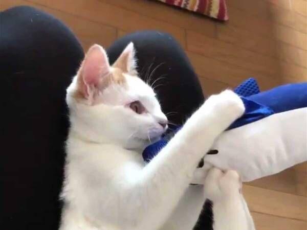 ぬいぐるみをもらった子猫 次の瞬間、ものすごい勢いで…?
