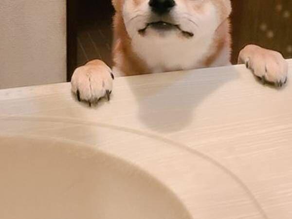 ねぇ、なにしてるのー? 飼い主の後をついてくる子犬に「泣けるほどかわいい」の声