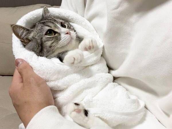 飼い主の新品バスタオルを気に入った猫 そのまま包んであげると…?