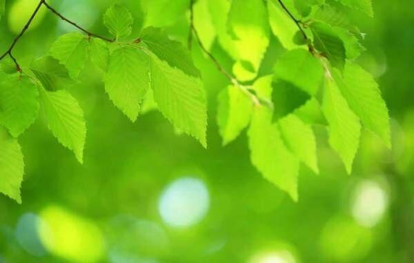 新芽や新緑が爽風を受けて、色鮮やかに自己表現を始める五月