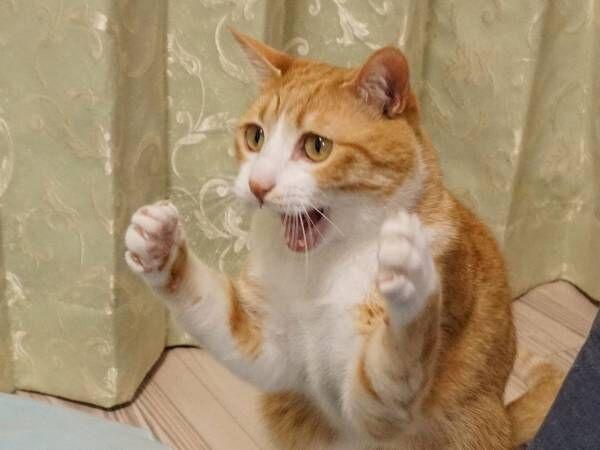 猫パンチを熱血指導する猫 その姿に12万件以上の『いいね』が寄せられる