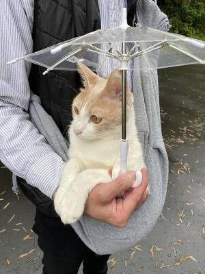 雨の日も散歩に行きたい猫 おねだりの結果がこちらです