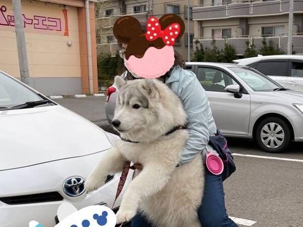 動物病院を嫌がるシベリアンハスキー 飼い主の『運び方』に、癒される