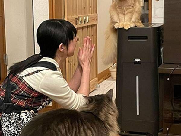 洗面所に閉じ込めたことを謝る飼い主 猫の表情に「かわいい」「哀愁が漂っている」