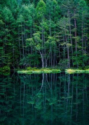 長野県の山奥で撮影された、森の中へ吸い込まれそうな3枚がこちら