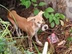 脚と口を縛られた状態で見つかった瀕死の子犬 現在の姿に笑みがこぼれる