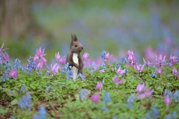 北海道で出会ったかわいい小動物 草花に囲まれた姿に心癒される【全3枚】