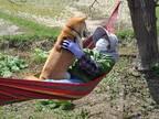 日常を写した1枚に反響 ハンモックで柴犬とおばあさんが?