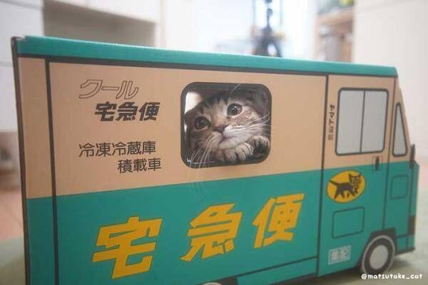 「心を完全に持っていかれた!」 配達員になりきる子猫をご覧ください