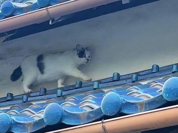 屋根を歩く猫の後ろに… アニメや漫画のワンシーンのようだと話題に!