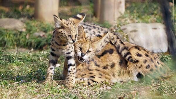 動物の親子写真を見て共感の声が続出 その理由とは…?