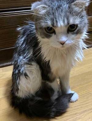 おやつの時間だと思ったら… 待ち受けていた悲劇に猫ちゃんが見せたガン飛ばし