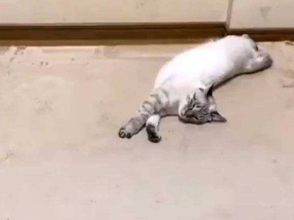 部屋の片付け中に爆睡する猫、まさかの展開に吹き出す!