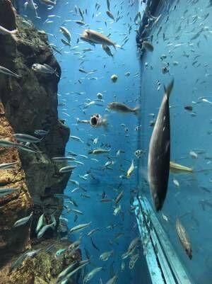 「笑った」「夢に出てきそう」 水族館で泳ぐイワシの中に?