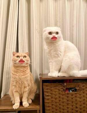 「笑いすぎてお腹痛い!」 猫をスマホで撮影したら…衝撃の4枚がこちら