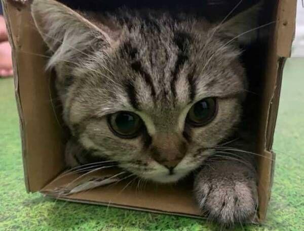 「ぼく、怒ってます」 無言の圧をかける子猫、その理由とは?
