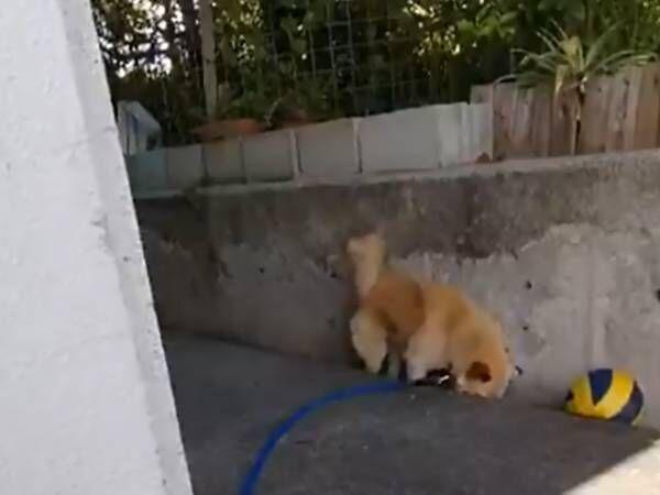 犬の様子を見守っていたら、いそいそと? 動画に「お宝映像」の声