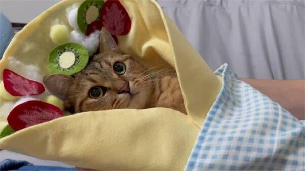 クレープの中でウトウト… スイートな子猫の写真に、11万人が悶えた