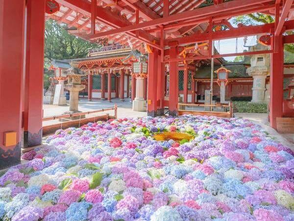 「ため息が出た」「風流だなあ」 太宰府天満宮で撮影された1枚が、ネットで大反響