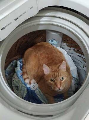 夫「猫がいない!きっと外に逃げたんだ」 外を探し回った、1時間後…?