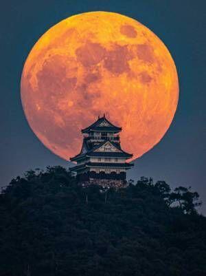すごい迫力だ! 岐阜城の背景に大きなストロベリームーン