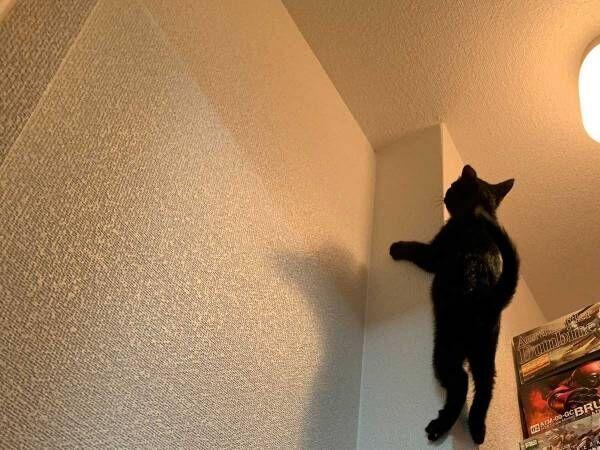 「何してるの!?」「どうやったらそうなる」 無数の箱が積まれた部屋にいた猫の様子を見に行ったら?