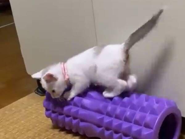 「懲りずに震えてる」 子猫を撮影した20秒の動画に、心がプルプル…