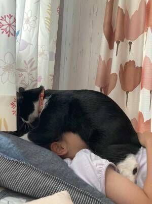 「お金払うからうちにも来て」「容赦ない」 娘を起こす猫の姿が大胆すぎる!