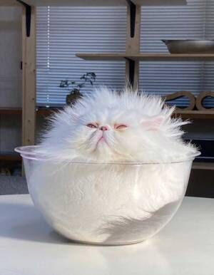 エアコンで涼んでいた猫が? 「何だこれは」「空中を浮遊していそう」