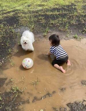 「いい写真」「神々しい」 体を洗ってもらった翌日に、泥遊びをした犬の表情が?