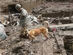「涙が出た」「本当にありがとうね」 熱海市へ派遣された、救助犬に感謝の声
