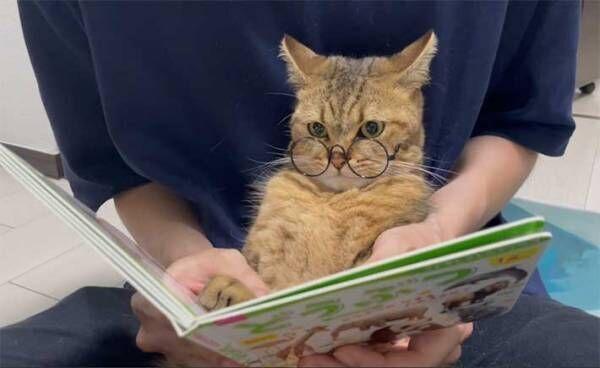 ライオンを見た猫の反応に14万人がいいね! 「笑った」「天才」