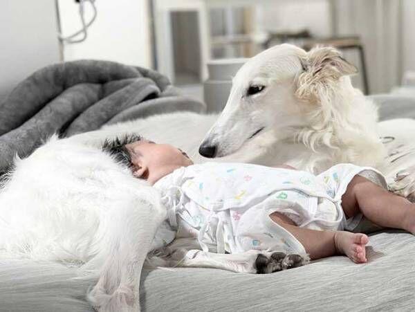 「美女だな」「気品にあふれてる」 狩猟犬ボルゾイと赤ちゃんのコンビにキュン!