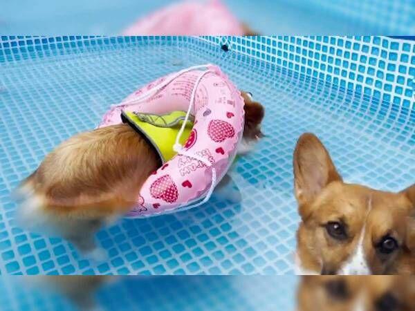 プールの中で泳いでいた犬 『浮かぶこと』に気付いたとたん…?