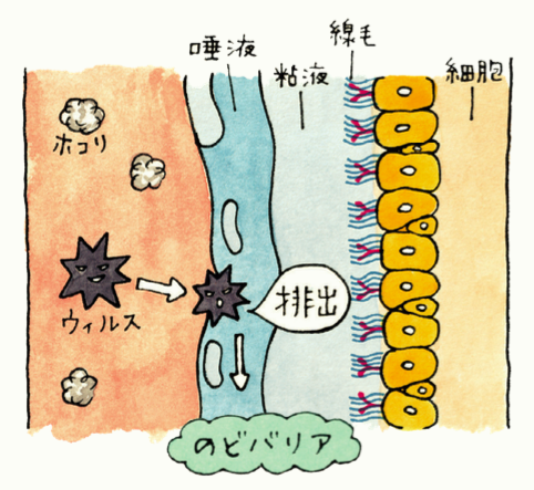 """感染症が増える季節 """" のどバリア """"を高めて 細菌・ウイルスをシャットアウト!"""