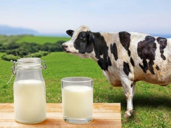 毎日牛乳をモ~1杯。プラスワンプロジェクトに参加しよう!牛乳をたっぷり使うレシピ3選