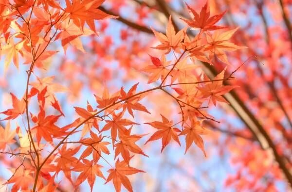 秋の衣替えはいつが正解?夏服との入れ替えどきの目安とおすすめ収納方法