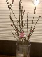 割れない花瓶でインテリアに華を。【EICO ママのらくヤセメソッド・19】
