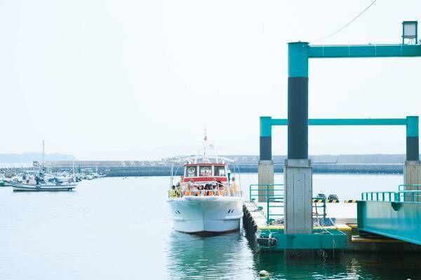 野生イルカに会える!長崎・南島原〈かづさイルカウォッチング〉でクルーズウォッチング。