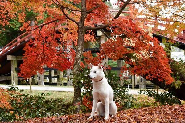かわいい動物に会える!奉献された動物に癒される全国の神社。【埼玉・静岡・和歌山・奈良】