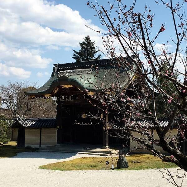 【保存版】京都在住・写真家おすすめの寺社巡り方ルート。嵐山エリアの五感を刺激し、感性を磨くコースとは?