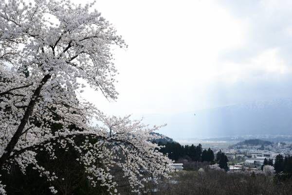 紅花の町・山形県白鷹町で森林体験や深山焼の工房見学ツアーを実施。