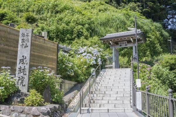 縁結びのパワースポットも!知っておきたい鎌倉の神社仏閣5選