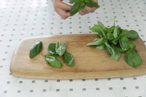 バジルの香りを長く楽しめる!「フレッシュバジルのオイル漬け」のレシピ