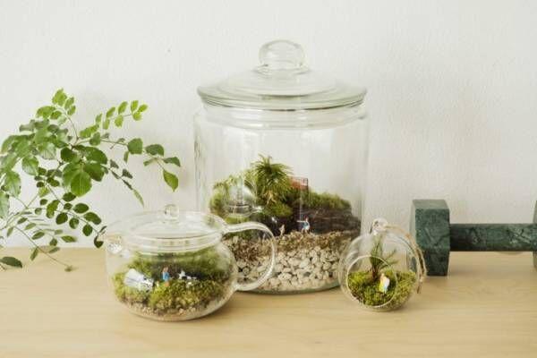 初心者でも簡単「テラリウム」の作り方。苔が創り出す小さな世界に思わず夢中に!
