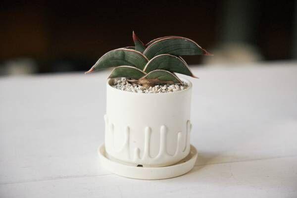 いい部屋づくりにはやっぱり植物!人気セレクトショップから学ぶ『植物が喜ぶ、室内での育て方』