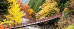 〈東京裏山ワンダーランド〉の謎解きエコツアー第3弾が、11月19日(木)スタート!